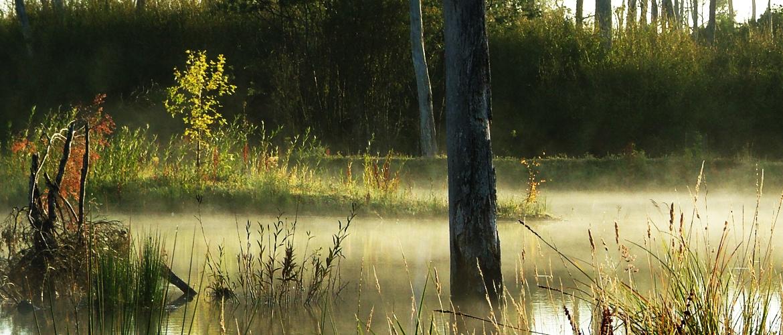 s_wetland